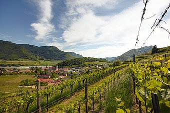 View from they vineyards to the Danube © Hans Ringhofer