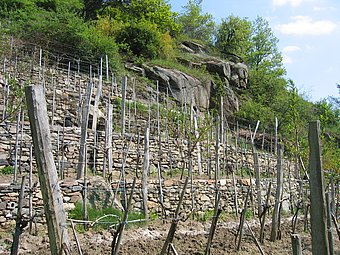 The dry stone wall terracing enables the steep slopes to be used for growing wine © Michael Schimek